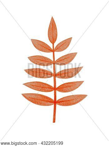 Hand Drawn Red Pinnately Compound Leaf With A Rough Texture. Isolated Plant Drawing With Colored Pen