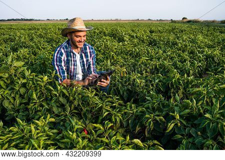 Happy Farmer Is Examining His Pepper Plantation.