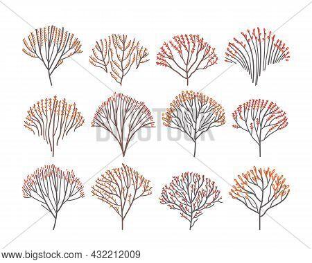 Set Of Autumn Deciduous Trees In Line Art Style. Isolated Stylized Autumn Trees. Flat Vector Illustr