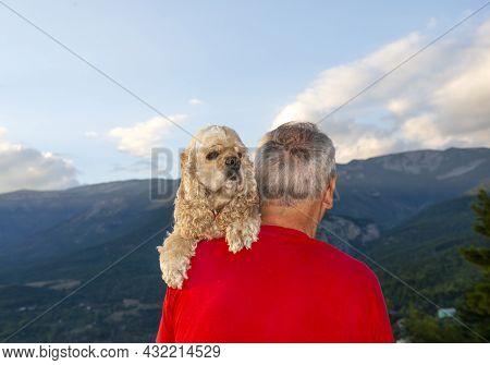 Senior Man With American Cocker Spaniel Posing Outdoors