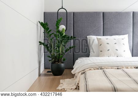 Home Bedroom Closeup, Plant Flower Pot Near Bed. Room Natural Decoration At House Interior, Nobody A