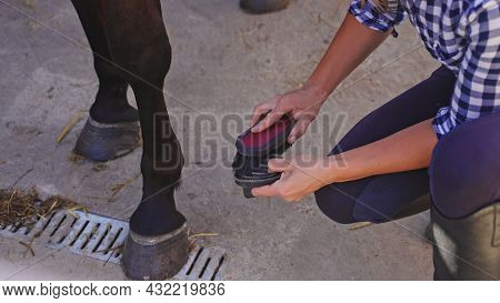 A Young Handsome Girl In A Squatted Plaid Shirt Brushes A Black Forearm Near A Horse. High-quality P