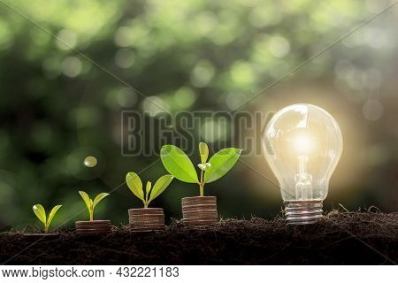 Plant Growing On Coins And Light Bulb. Energy Saving Light Bulb And Tree Growing On Stacks Of Coins