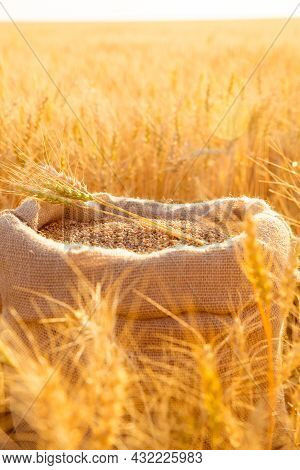 Canvas Bag With Wheat Grains And Mown Wheat Ears In Field At Sunset. Concept Of Grain Harvesting In