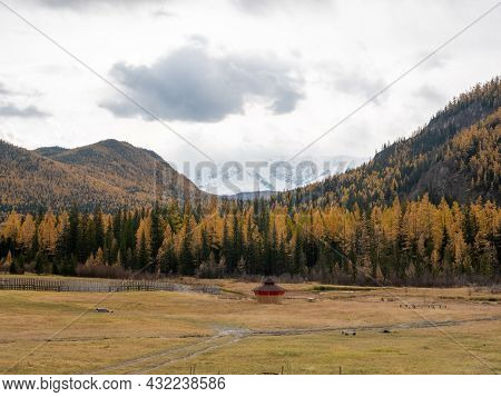 Autumn View Of The Snow-capped Mountains Of Altai And A Dense Forest Near The Village Of Aktash. Chu