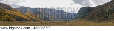 Panoramic Autumn View Of The Altai Mountains And Grazing Horses. Chuysky Tract, Altai Republic, Russ