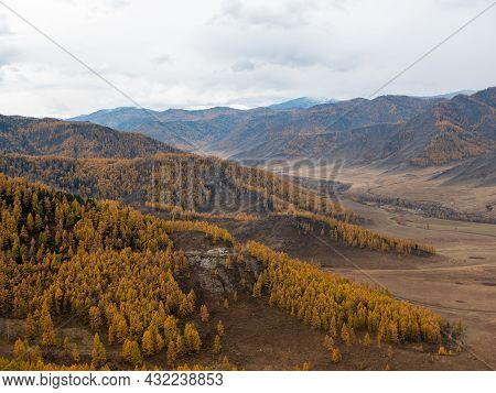 Autumn View Of The Altai Mountains, Snow-capped Peaks And Yellow Forest From The Chike-taman Pass. C