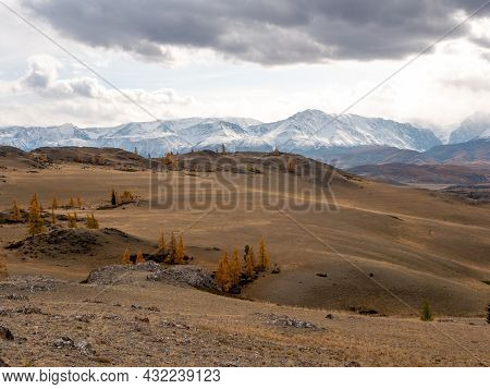 Autumn View Of The Altai Mountains, Snowy Peaks And Bright Yellow Trees On The Hills. Severo-chuysky