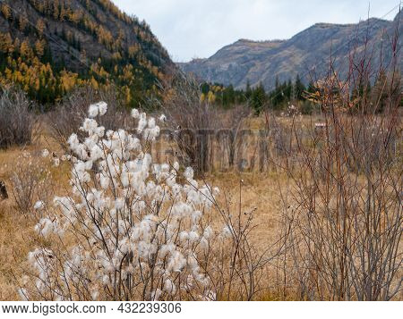 Autumn View Of The Altai Mountains And Marsh Grass. Chuysky Tract, Altai Republic, Russia.