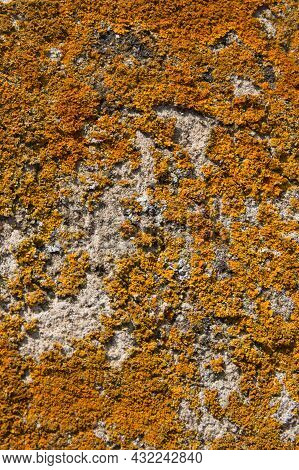Background. Stone Wall Covered By Yellow Lichen. Sunny Day. Europe