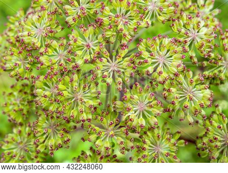 A Colorful Full Frame Withered Blossom Closeup