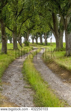 Rural Scenery With Farm Track And Fruit Trees At Summer Time In Southern Germany