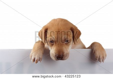 Puppy On The Fence