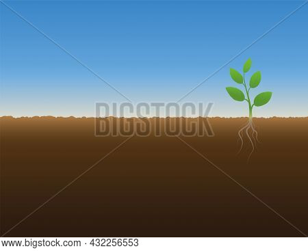 Sprout Rises Up From The Ground. Young Little Plant With Roots Sinking Into The Earth And Leaves Str