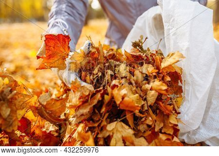 A Close Shot Of A Gloved Hand Being Picked Up And Stacked A Pile Of Leaves In A Bag. Collecting Fall
