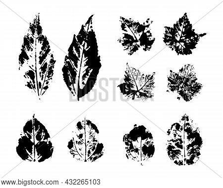 Collection Of Black Leaves Imprints On White Background. Set Of Stamp Vector Autumn Leaf. Botanical