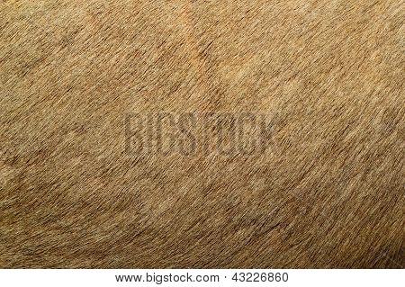 Red Deer Textured Fur