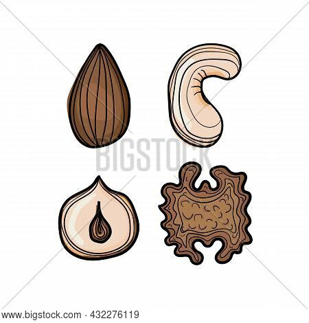 Vector Illustration Of Nuts Using Shades Of Brown And Strokes.