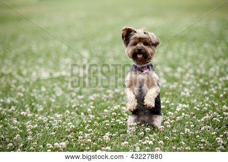 Cute dog sitting up in a field