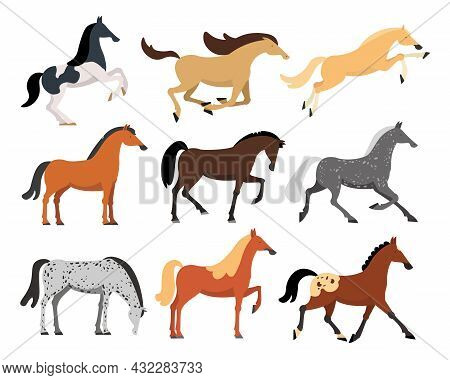 Horses Of Different Breeds Flat Vector Illustrations Set. Wild Or Domestic American, Arabian, Thorou