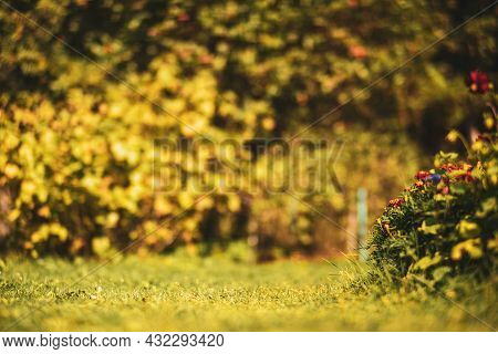 Close-up Flower Bed With Highly Blurred Background With Copy Space. Fresh Grass Meadow In Sunny Morn