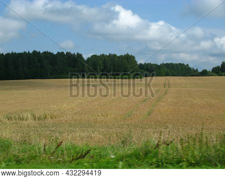 The View Of Fields And Forests In Lithuania, Europe