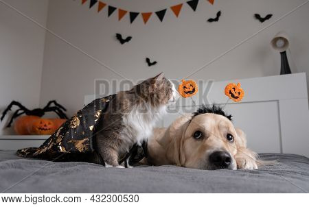 Dog And Cat With Pumpkins For Halloween. Golden Retriever And Kitten Playing On The Sofa In Hallowee