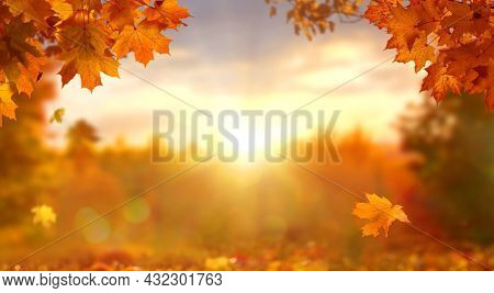 Sunny autumn day with beautiful orange fall foliage in the park. Ground covered in dry fallen leaves lit by bright sunlight. Autumn landscape with maple trees and sun. Natural background
