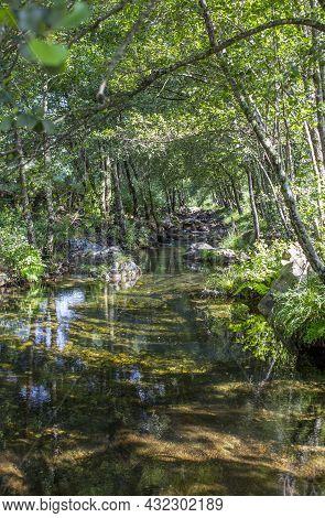 Barrel Vault Forest At Ribera De Acebo River. Exceptional Nature Spot In The Heart Of Sierra De Gata