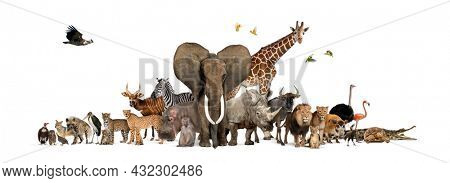 Remasterized: Large group of African fauna, safari wildlife animals together, in a row, isolated