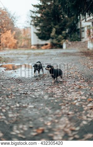 Beautiful And Happy Two Cute Adorable Puppies Walking In The Autumn Park Cute Puppy Looking At The C