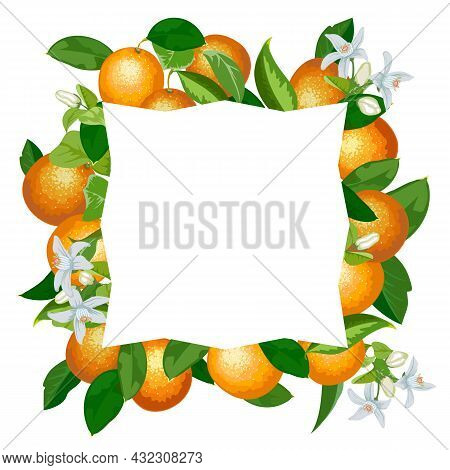 Decorative Frame With Bright Oranges.vector Banner With Oranges And Frame On A White Background.