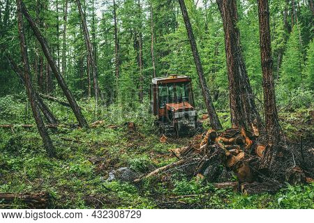 Vivid Woodland Landscape With Old Rusty Red Tractor On Forest Felling Among Firs And Lush Vegetation