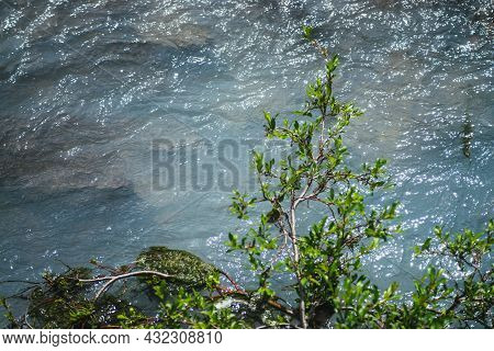 Sunny Nature Background With Branch Of Willow Tree Above Clear Azure Water Surface Of Mountain Lake