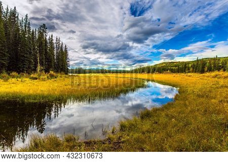 Yellow dry grass around a shallow lake. Picturesque Canadian Rockies. Coniferous evergreen forest among shallow lakes and swamps. The concept of ecological, active and photo tourism