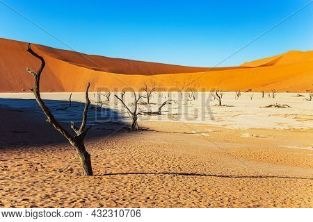 Picturesque dry fossilized tree remains at the bottom of the dried-up lake Sossusflei. The clay plateau in the Namib Desert. Afrika. The Valley, famous for the skeletons of dead trees