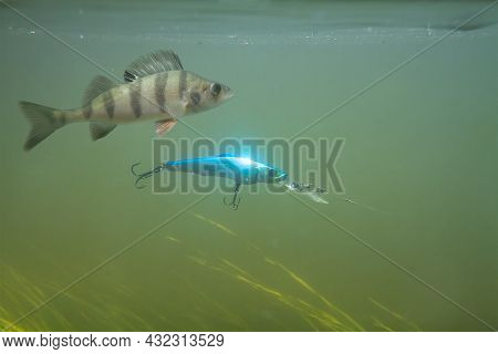 A Blue Wobbler Attached To A Fishing Line Floats In The Greenish Water Column In The River During Sp
