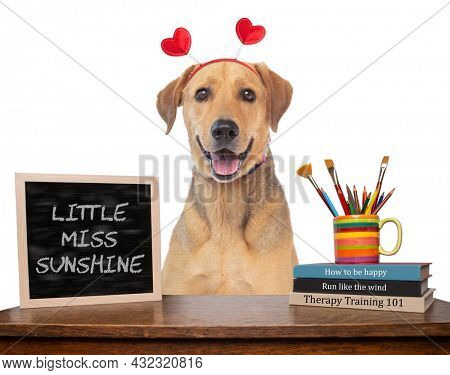 studio shot of a cute dog on an isolated background (BOOK TITLES ARE DIGITALLY MADE UP )