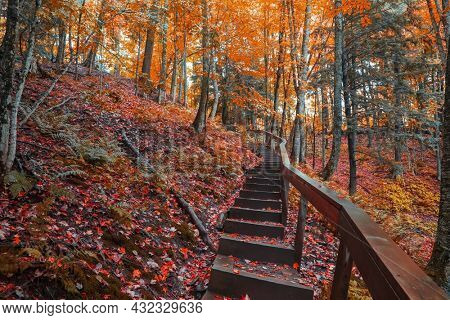 Wood stairs along the forest trail surrounded with fall foliage