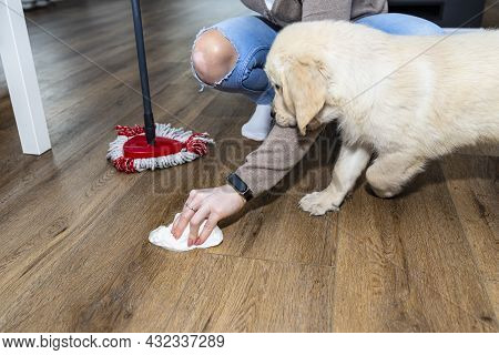 A Woman Wiping Piss On A Puppy Off Modern Water Resistant Vinyl Panels With A Paper Towel And Mop, N