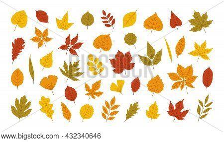 Autumn Leaves Set - Maple, Oak, Acacia, Linden, Birch, Horse Chestnut, Poplar, Alder, Aspen, Elm, As
