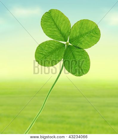 Green four leaf clover, illustration.