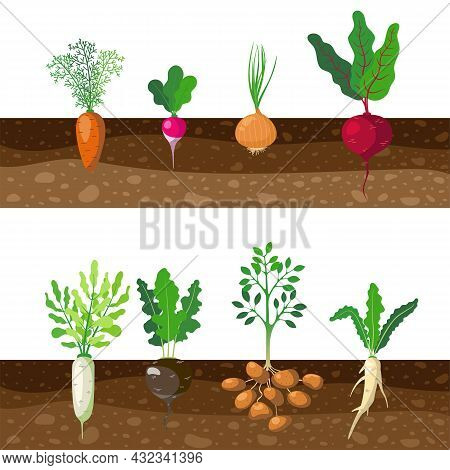 Set Of Different Rooted Vegetables Growing Underground. Cartoon Vector Illustration. Patch Of Tubers