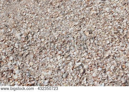 Summer Background Of Seashells On Beach At Dawn In Soft Sunlight For Travel Advertisement Or Summer