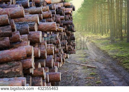 Trunks Of Felled Trees Are Prepared For Transportation On Timber Truck. Commercial Woodland Tree Cut