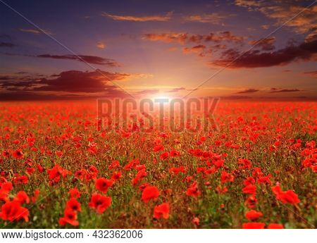 evening landscape with field of wild red poppies at sunset