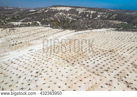 Reforestation And Ecosystem Restoration In Abandoned Limestone Quarry