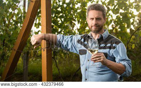 Cheerful Winemaker Man Hold Wineglass At Vineyard Outdoor, Winegrower
