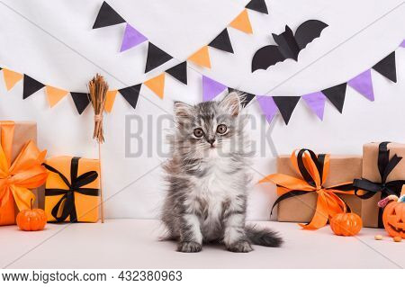 A Fluffy Cute Gray Kitten Is Sitting In A Halloween Style. Halloween Greeting Card. Happy Halloween.