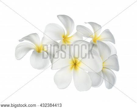 A Frangipani Flower Isolated On White Background
